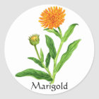 Kräutergarten-Reihe - Ringelblume Runder Aufkleber