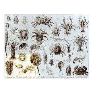 Krebstier und spinnenartige Tiere Postkarte