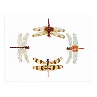 Kreis der Libellen Postkarte