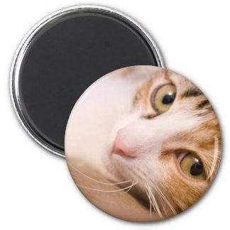 Kreiselkompaß die Katze Magnete