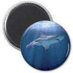 Kreuzender Haifisch Magnete