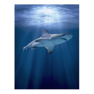 Kreuzender Haifisch Postkarte