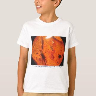 Kricket, Ohrwurm und Termite im dominikanischen T-Shirt