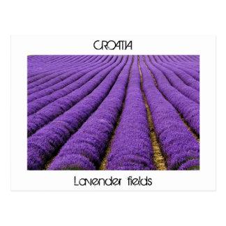 KROATIEN - Lavendelfelder Postkarte
