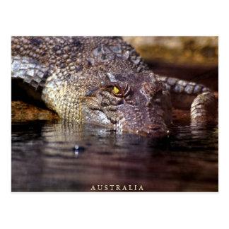 Krokodil, A U S T R A L I A Postkarte