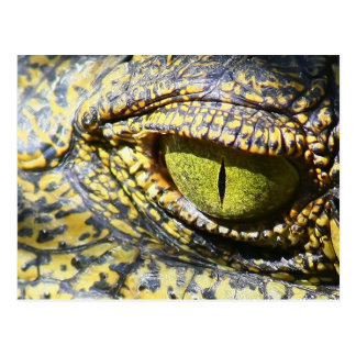 Krokodil-Auge Postkarte