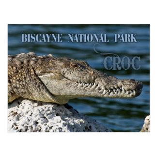 Krokodil, Biscayne Nationalpark, Florida Postkarte