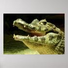 Krokodil / Crocodile Poster