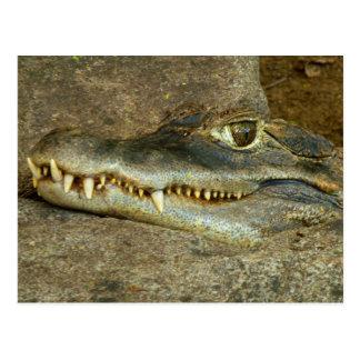 Krokodil-Kopf Postkarte