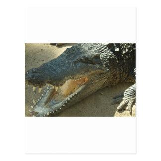 Krokodil mit defektem tooth.jpg postkarte