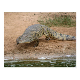 Krokodil Postkarte