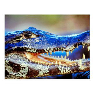 Krokodil und Caiman von Junglewalk.com Postkarte