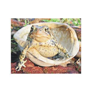 Kröte, die in einer Schildkröte-Muschel-Fotografie Leinwanddruck
