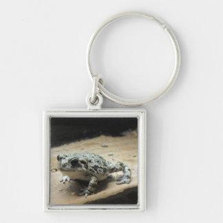 Kröte Keychain Schlüsselanhänger