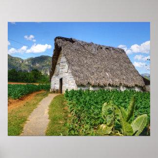 Kubanischer Tabak-Bauernhof und trocknendes Haus Poster