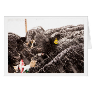 Kuh-anziehende Schneeflocken auf Karte