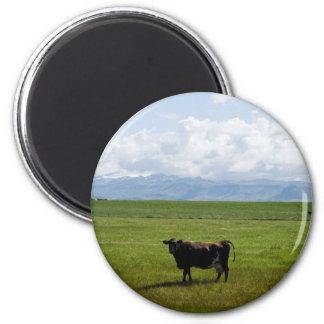 Kuh auf einem Gebiet Magnete