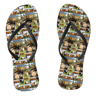 Kuh-Foto-Collage, drehen Reinfälle um, Flip Flops