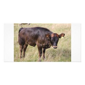Kuh-Fotokarte Foto Karten