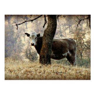 Kuh hinter Baum Postkarte