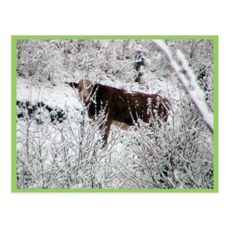 Kuh in den Büschen Postkarte