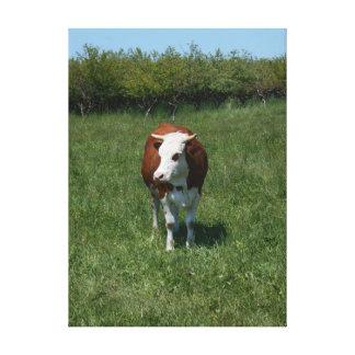 Kuh in der Weide Leinwanddruck