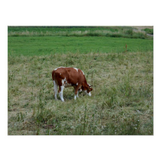 Kuh in der Weide Poster
