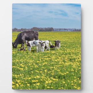 Kuh mit den Kälbern, die in der Wiese mit Fotoplatte