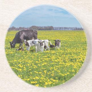 Kuh mit den Kälbern, die in der Wiese mit Getränkeuntersetzer