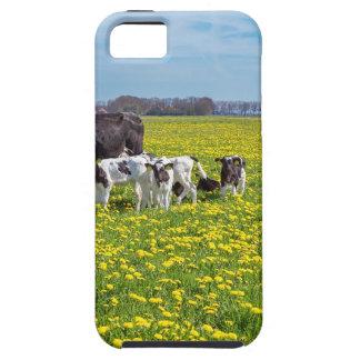 Kuh mit den Kälbern, die in der Wiese mit iPhone 5 Etui