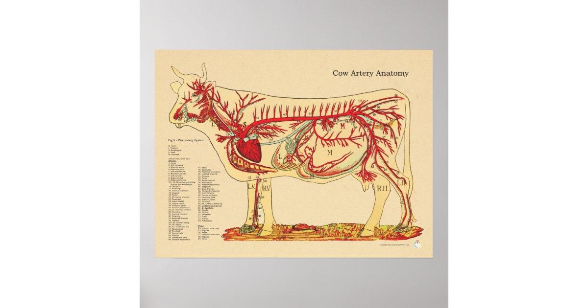 Ausgezeichnet Kuh Anatomie Diagramm Ideen - Menschliche Anatomie ...