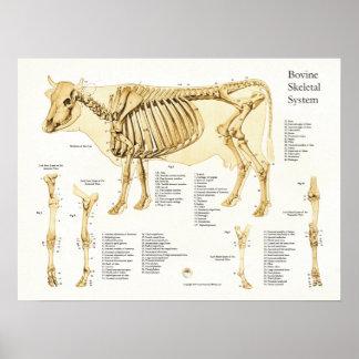 Kuh-skelettartiges Anatomie-Rinderplakat Poster