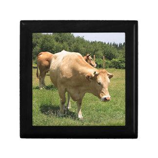 Kühe auf dem Gebiet, EL Camino, Spanien 2 Schmuckschachtel