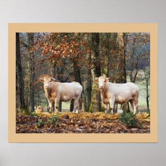 Kühe im Waldland, Frankreich Poster