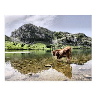 Kühe in den Seen von Covadonga, Asturien Postkarte
