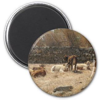Kühe Runder Magnet 5,7 Cm