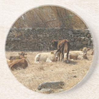 Kühe Sandstein Untersetzer