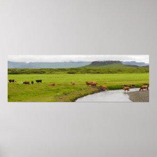 Kühe und Eldborg Krater-Island-Plakat Poster