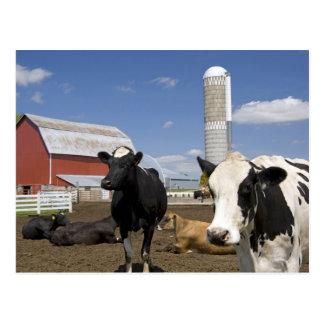 Kühe vor einer roten Scheune und einem Silo auf Postkarte