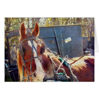 Kühles Morgen-Amische-Pferd Karte