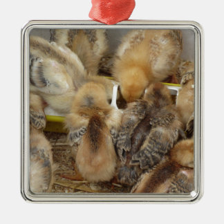 Küken auf dem Strohessen füttern im Huhnkorb Quadratisches Silberfarbenes Ornament