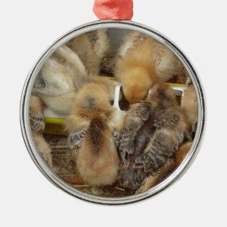 Küken auf dem Strohessen füttern im Huhnkorb Silbernes Ornament