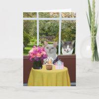 Kundengerechte hübsche Katze weiblicher Photobomb