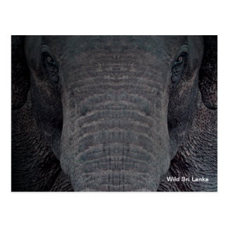 Kundengerechte Sri Lanka Elefant-Postkarte Postkarte