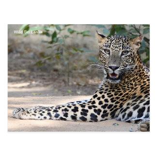 Kundengerechte Sri Lanka Leopard-Postkarte Postkarte