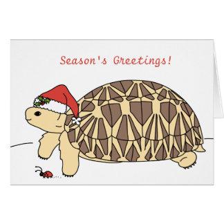 Kundengerechte Stern-Schildkröten-Weihnachtskarte Karte