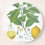Kundengerechter Vintager Zitronen-Sandstein-Unters