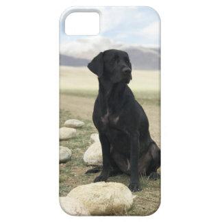 Kundengerechtes schwarzes Labrador retriever iPhone 5 Hülle