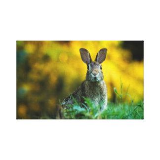 Kundenspezifisches Ostern-Kaninchen dehnte Leinwanddruck