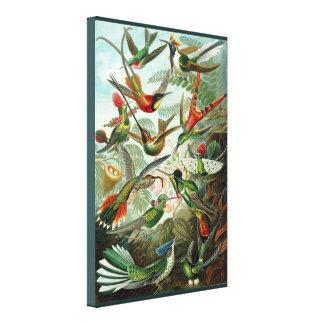 Kunst-Kolibris - Kunstformen der Natur Leinwanddruck